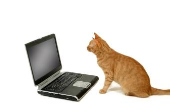 cat sitting lokking at laptop